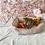 Thumbnail: Shiba Inu #535 Female