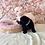 Thumbnail: Mini Bernedoodle F1b #779Male