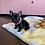 Thumbnail: French Bulldog #051 Female