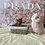 Thumbnail: Shiba Inu #496 Female
