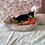 Thumbnail: Shiba Inu #537 Female