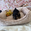 Thumbnail: Toy Yorkshire Terrier #701 Male