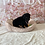 Thumbnail: Mini Goldendoodle #021 Male