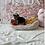 Thumbnail: Yorkshire Terrier #258 Male