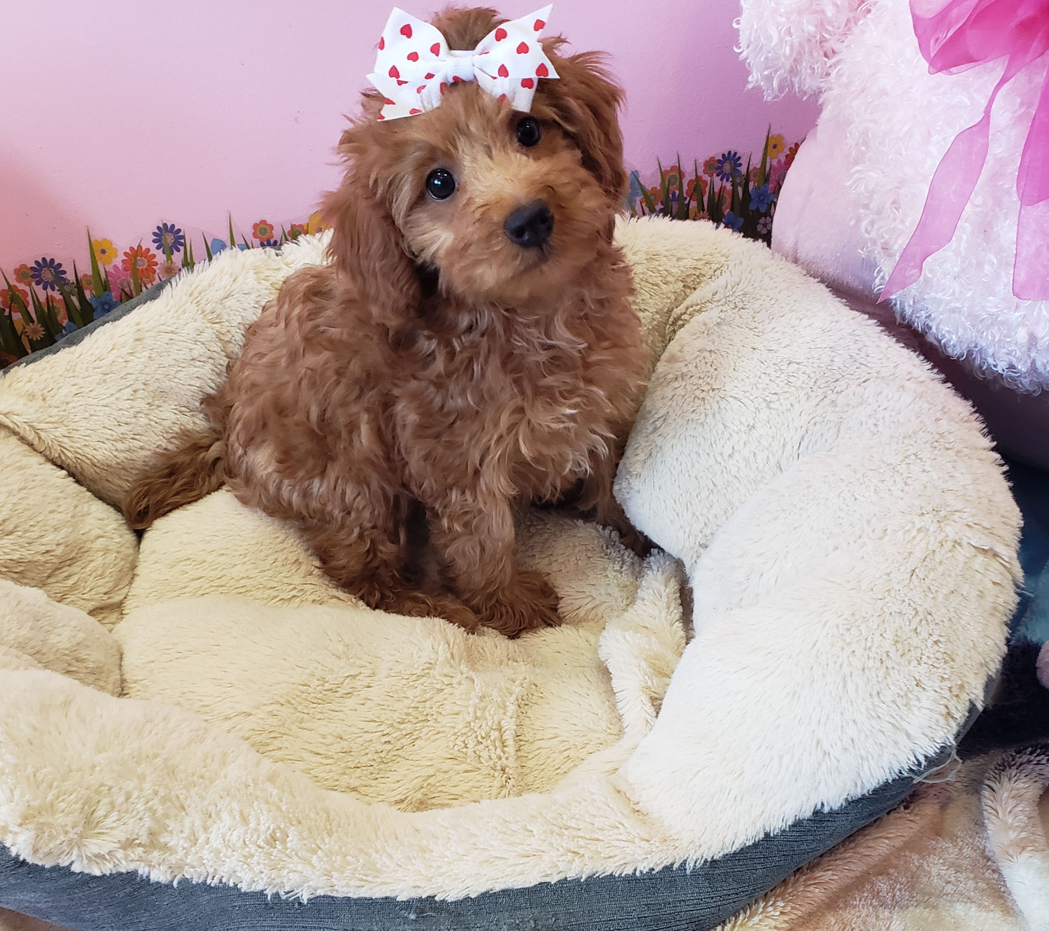 Financing | Puppy Town