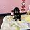Thumbnail: Mini Goldendoodle 2nd Gen #294 Male