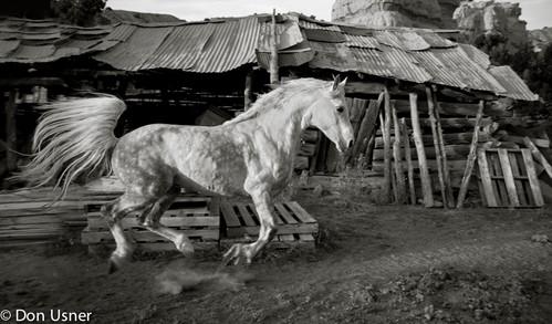 Chimayó Monochrome