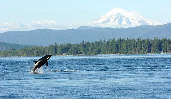 LESSON: Is there a problem in Puget Sound?
