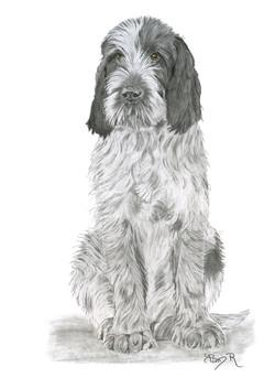 16_Brown Pup2