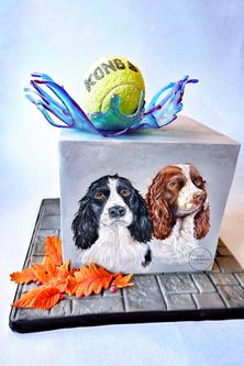 Springer Spaniels Dogs 1.PNG
