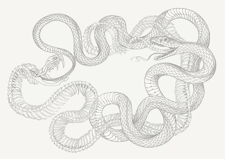serpent_pour_site.jpg