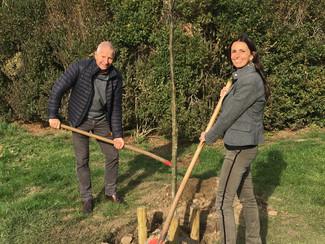 Tongeren plant Vredesboom om 100 jaar wapenstilstand te herdenken