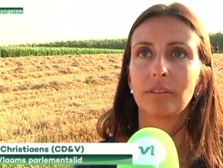 Reddingsplan voor laatste wilde hamsters van Vlaanderen in Widooie