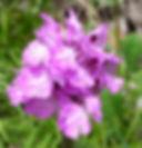 Sorrento Amalfi Hikes flowers