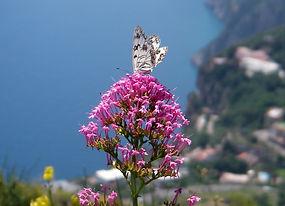 Hikes, Walks, Treks Sorrento, Treks Amalfi