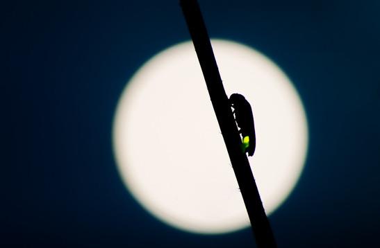 満月とホタル