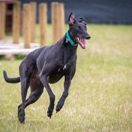 Durham District Retired Greyhounds.jpg.j