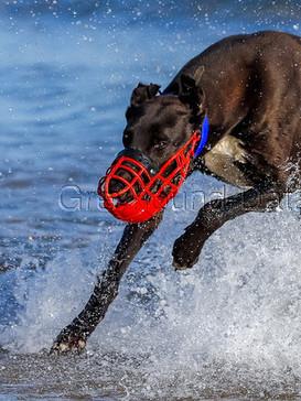 Greyhound_Incredible_Too-_5big.jpg