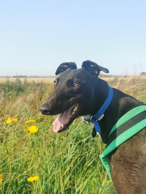 Dog adoption skegness