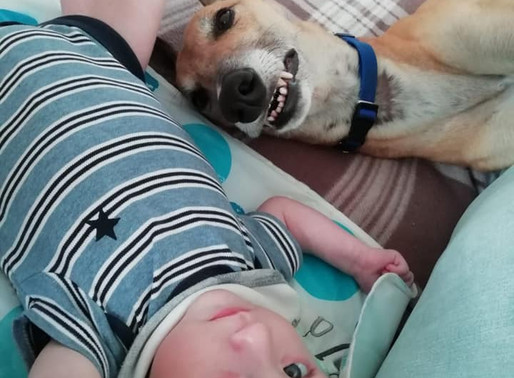 Part 1: An Update on our Homed Greyhounds