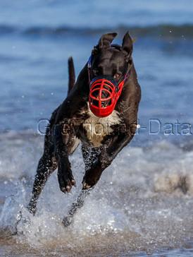 Greyhound_Incredible_Too-big.jpg