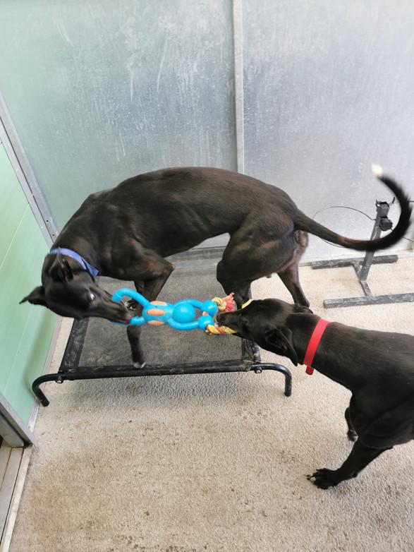 dog rescue skegness