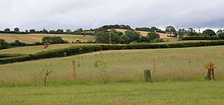 eastward view from pitches.jpg