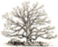 Tree -pen and ink_BW - Copy.jpg