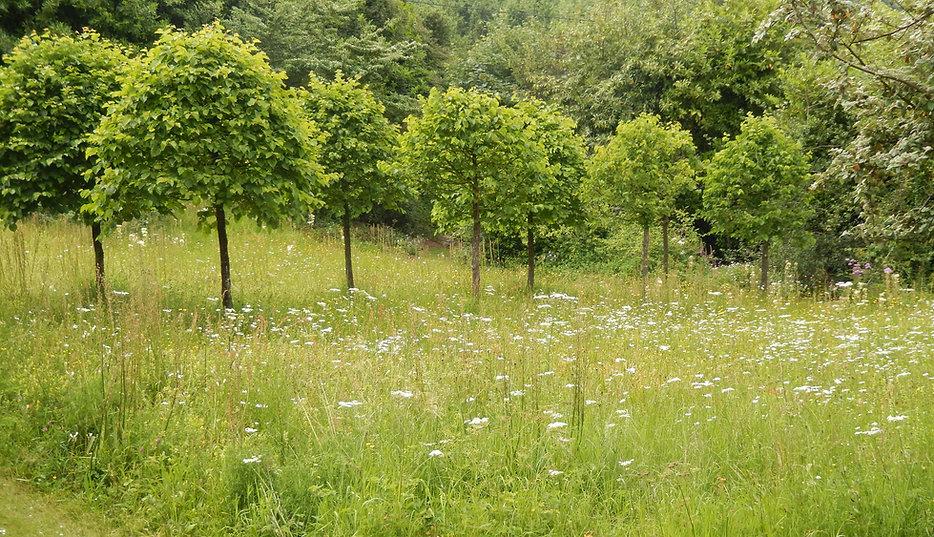 Garden wildflower meadow in summer