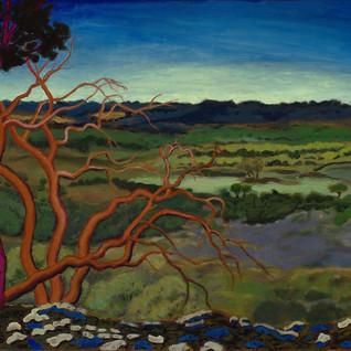 Vera Smith Magic Trees of Wimberley.jpg
