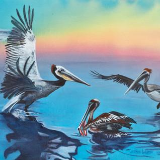 Pouncing Pelicans.jpg