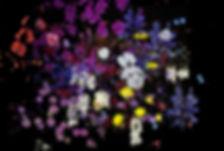 nightbloomers1.jpg