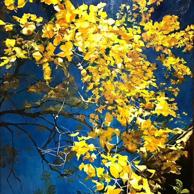 Slocum.P_tree.jpg