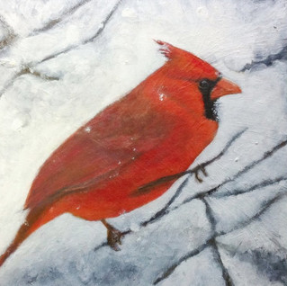TinaKaragulian_Male Cardinal in   Snow.j