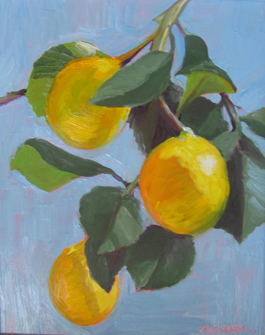 27 Lemons on Branch_14x11.jpg