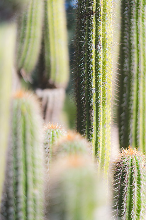 Prickly Perfection