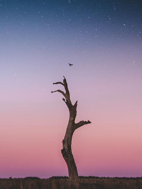 Starry Flight