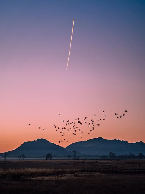 In Flight