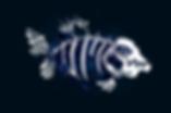 MeberShipCarte_Truite_avant_v1.0.png