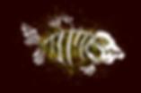 MeberShipCarte_Piranha_avant_v1.0.png