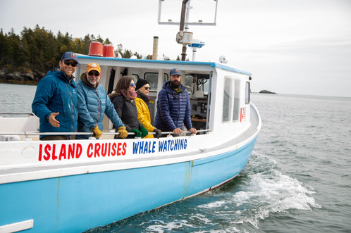 Whale watching on Campobello Island