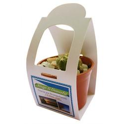 cactus-en-envase-kraft (1)