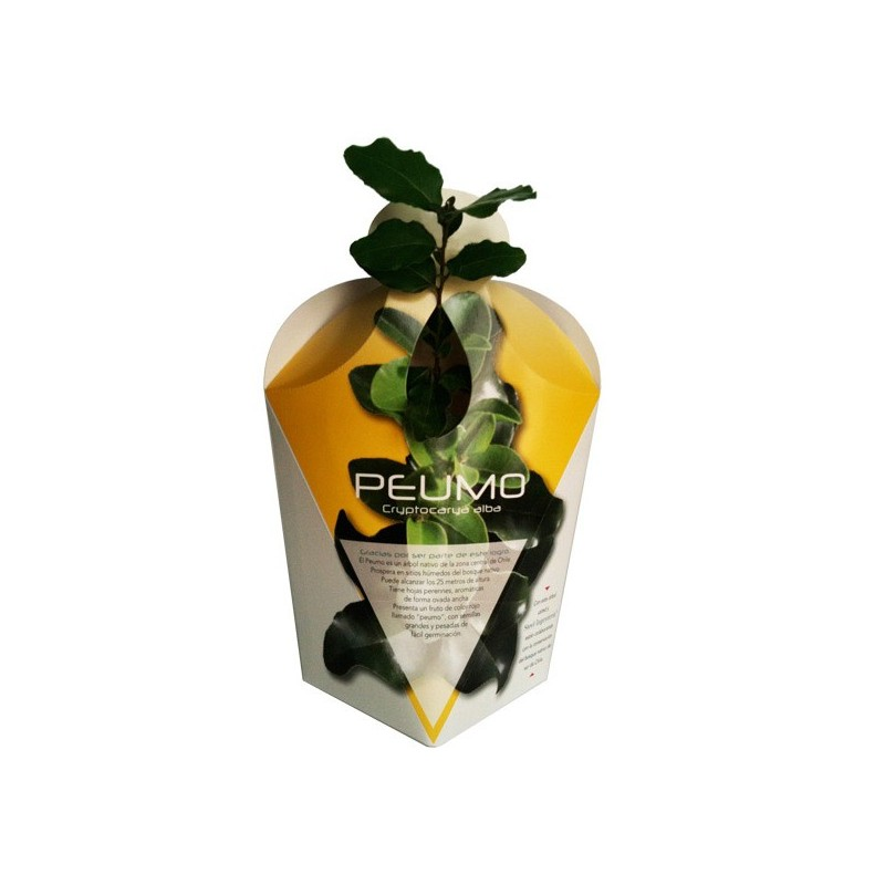 arbol-nativo-envase-cartulina