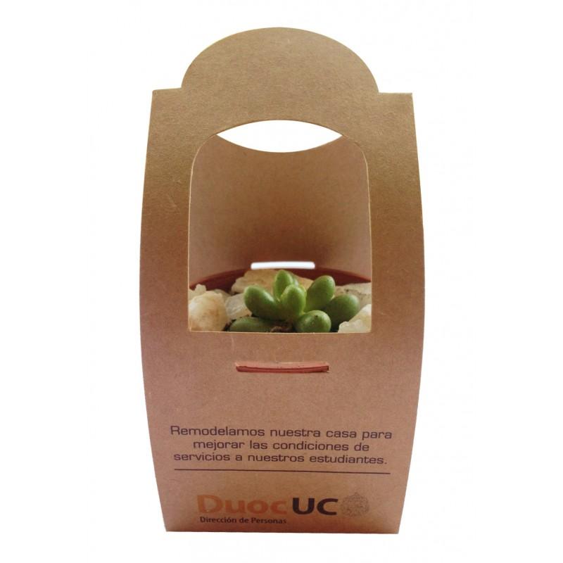 cactus-en-envase-kraft