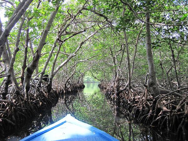 Ein Boot faehrt durch den Mangrovenkanal in Jonesville, Roatan