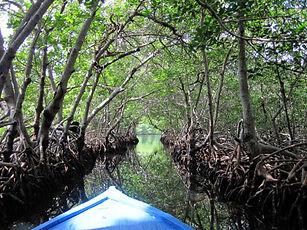 Ein Boot gleitet lautlos durch den Mangroventunnel in Jonesville, Roatan