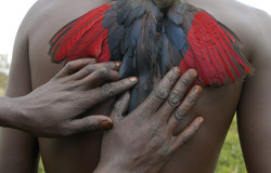 Samburu_32_HANDS ON BIRD.jpg