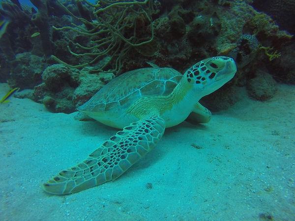 sea-turtle-1024x768.jpg
