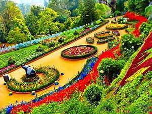 Botanical-Garden-ooty.jpg