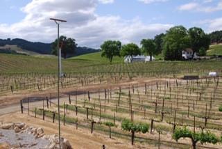 Perch in a vinyard